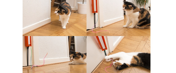 kattsnore-julklapp-till-husdjur-2016