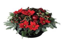 midvinternatt julblommor