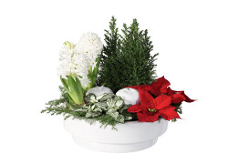 traditionella julblommor
